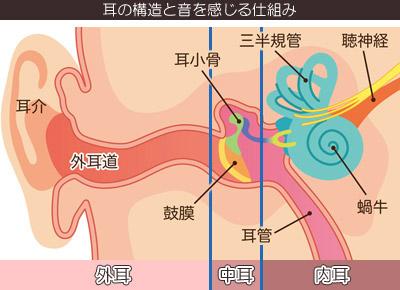 耳の構造と音を感じる仕組みの写真