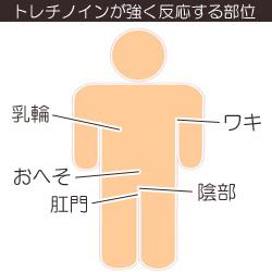 トレチノインが強く反応する身体の部位の画像