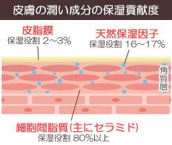皮膚の保湿機能のセラミドの割合