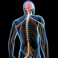 自律神経の写真