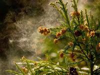 花粉症の画像