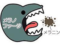 メラノファージがメラニンを食べるイメージ