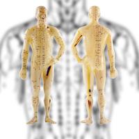 身体に張り巡る神経やリンパの写真