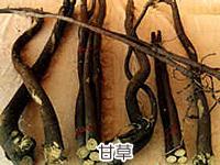 甘草の画像