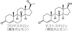 プロゲステロンとテストステロン