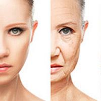 若い肌と老化した肌の比較画像